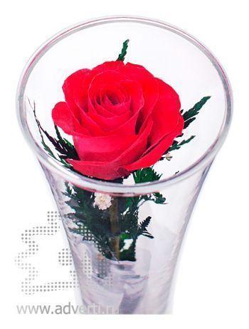 Композиция из красной розы
